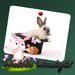rabbits wonderful